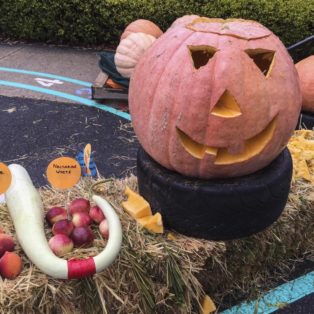 dwellingup pumpkin festival
