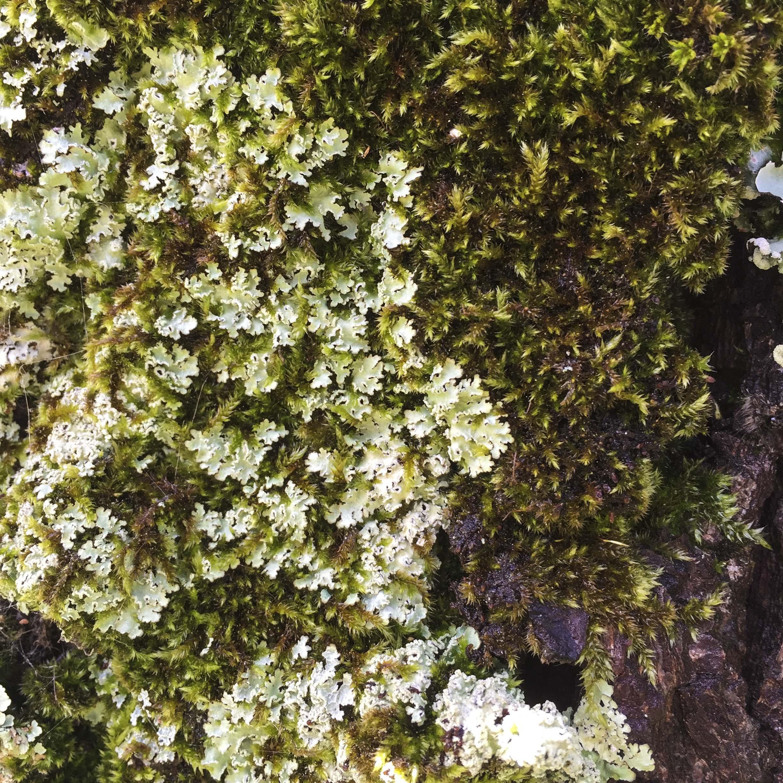 liking lichen & moss