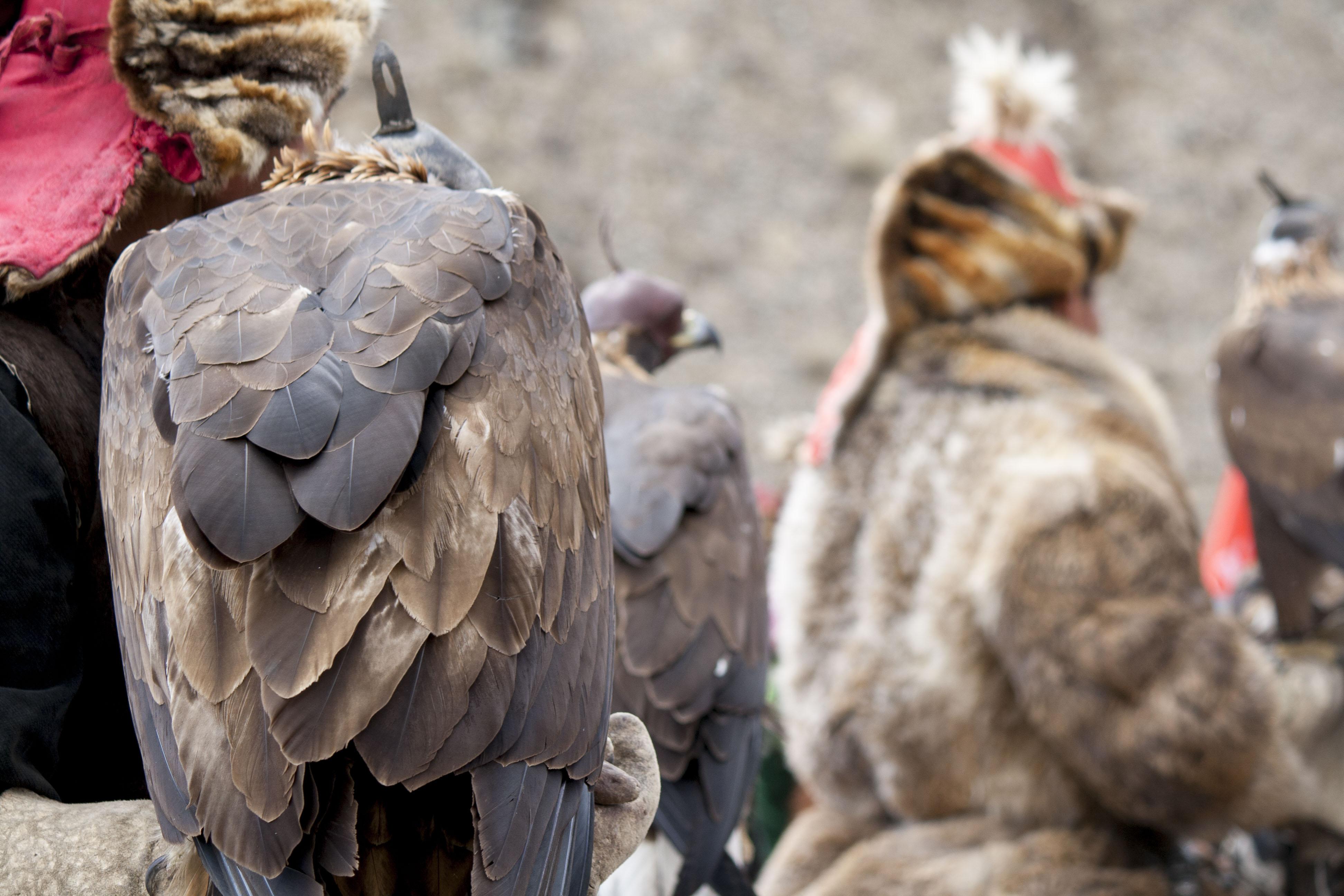 altai-eagle-festival-6