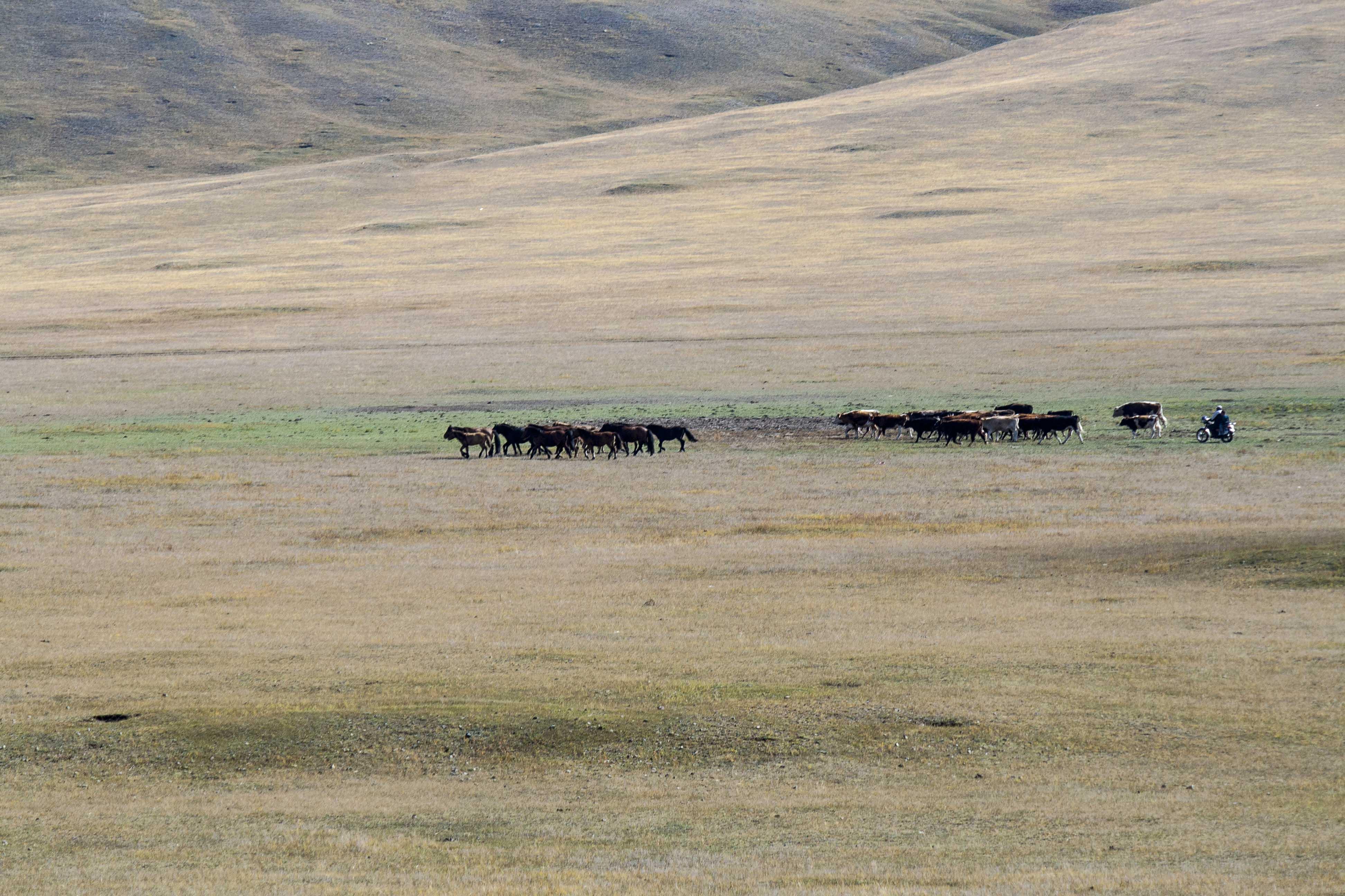 mongolian-landscape-3